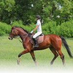 Dan horse