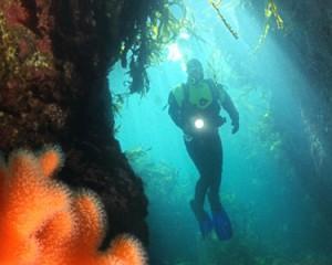 nor diving